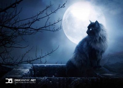 cat-in-the-night-1400x1050